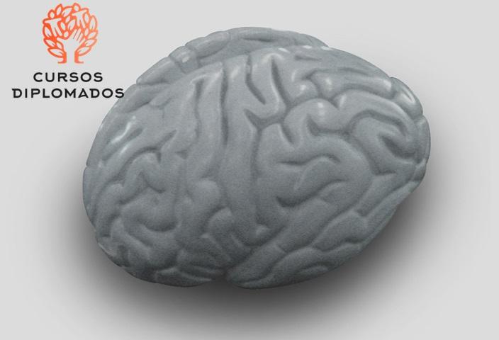 El Desarrollo de la Metacognicion